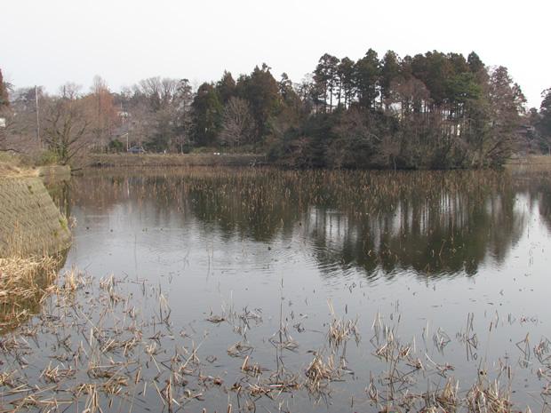 蓮池公園(はすいけこうえん)